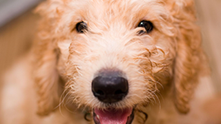 Home - Houston Shaggy Dog Rescue